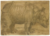 Durer- never saw a rhinoceros