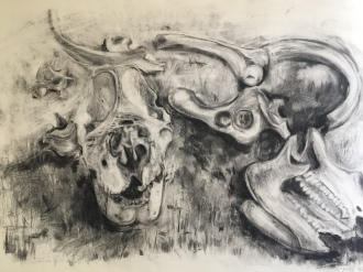 Rhino bones crime scene